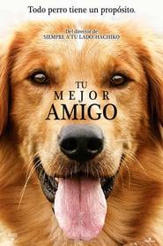 La razón de estar contigo (2007) Online Completa en Español Latino