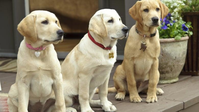 Una pareja de tres 2: Los años cachorros (2011) Online Completa en Español Latino