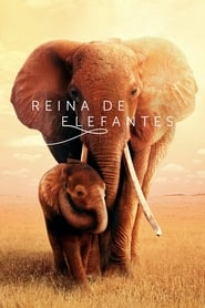 Reina de elefantes Online (2019) Completa en Español Latino